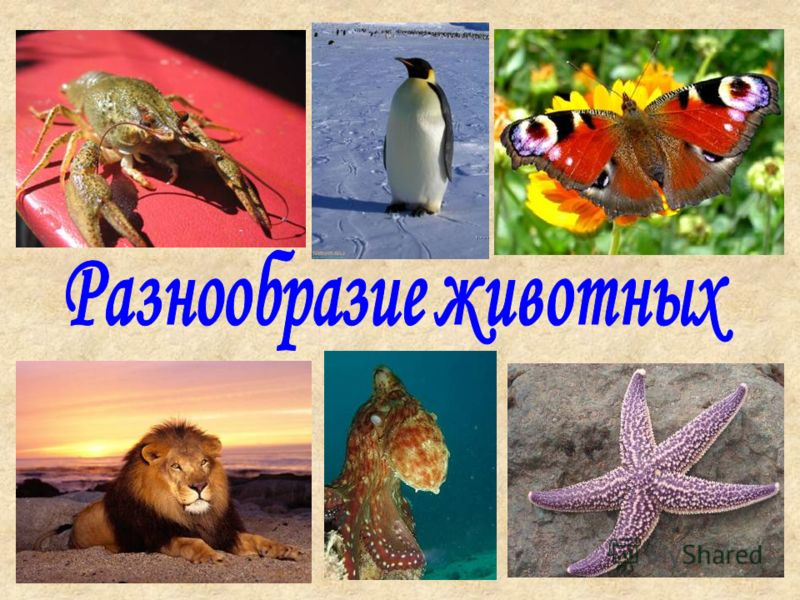 Презентация На Тему Моллюски