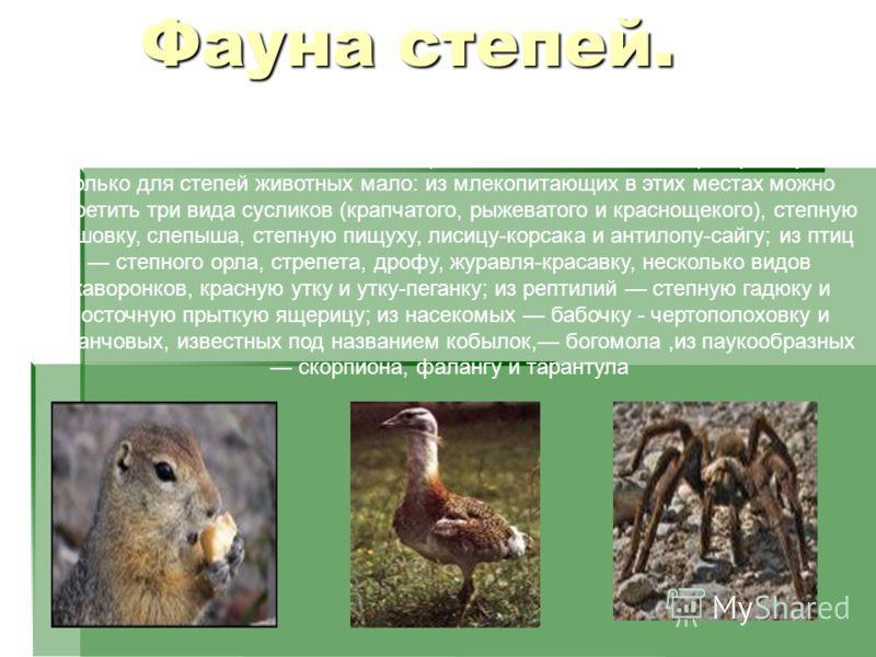 Но, несмотря на эти неблагоприятные условия, в степях обитает много разнообразных животных. Если даже взять одних только позвоночных, то здесь живет свыше 50 видов млекопитающих и около 250 видов птиц. Характерных только для степей животных мало: из