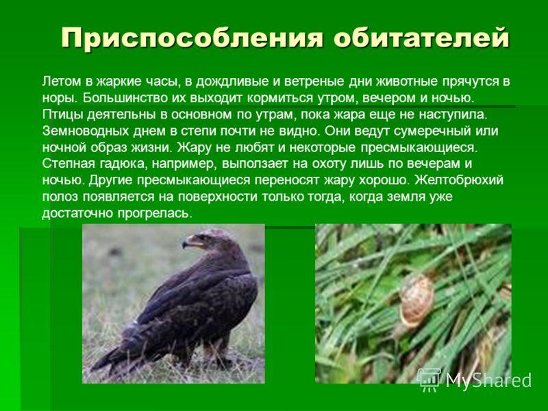 Летом в жаркие часы, в дождливые и ветреные дни животные прячутся в норы. Большинство их выходит кормиться утром, вечером и ночью. Птицы деятельны в основном по утрам, пока жара еще не наступила. Земноводных днем в степи почти не видно. Они ведут сум