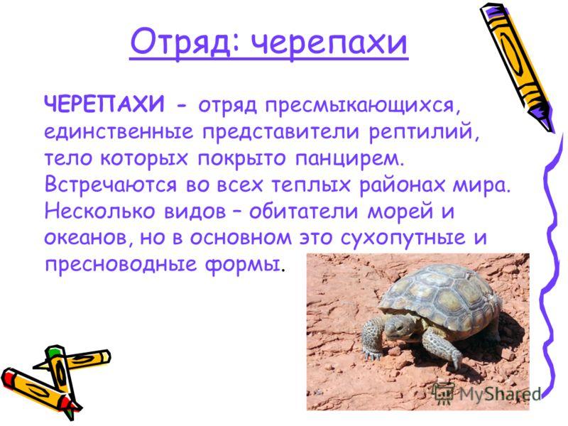 Отряд: черепахи ЧЕРЕПАХИ - отряд пресмыкающихся, единственные представители рептилий, тело которых покрыто панцирем. Встречаются во всех теплых районах мира. Несколько видов – обитатели морей и океанов, но в основном это сухопутные и пресноводные фор