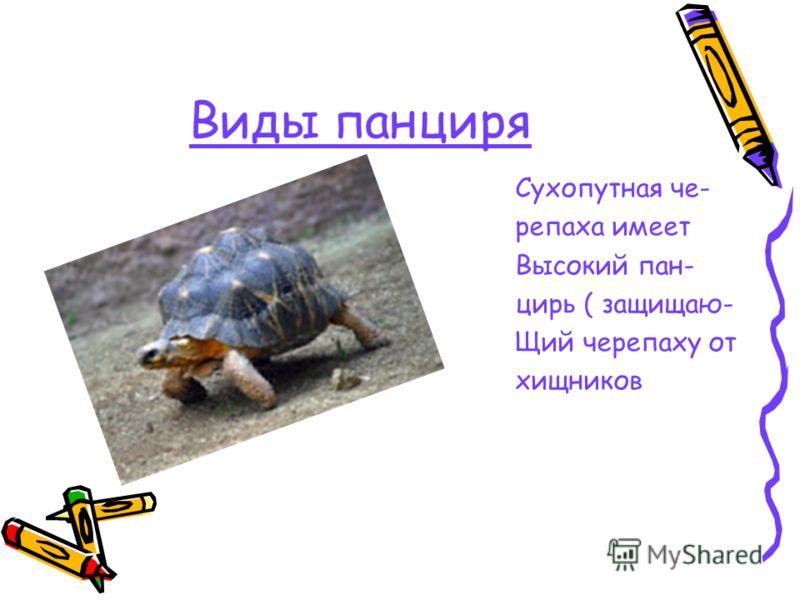 Виды панциря Сухопутная че- репаха имеет Высокий пан- цирь ( защищаю- Щий черепаху от хищников