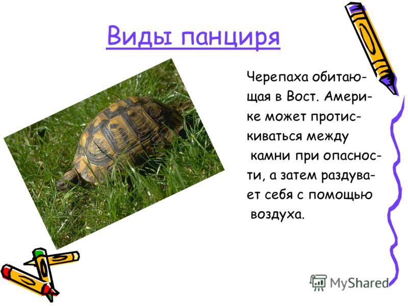 Виды панциря Черепаха обитаю- щая в Вост. Амери- ке может протис- киваться между камни при опаснос- ти, а затем раздува- ет себя с помощью воздуха.