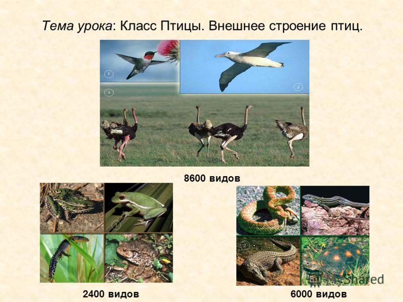 Тема урока: Класс Птицы. Внешнее строение птиц. 8600 видов 2400 видов6000 видов