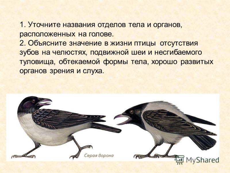 1. Уточните названия отделов тела и органов, расположенных на голове. 2. Объясните значение в жизни птицы отсутствия зубов на челюстях, подвижной шеи и несгибаемого туловища, обтекаемой формы тела, хорошо развитых органов зрения и слуха.