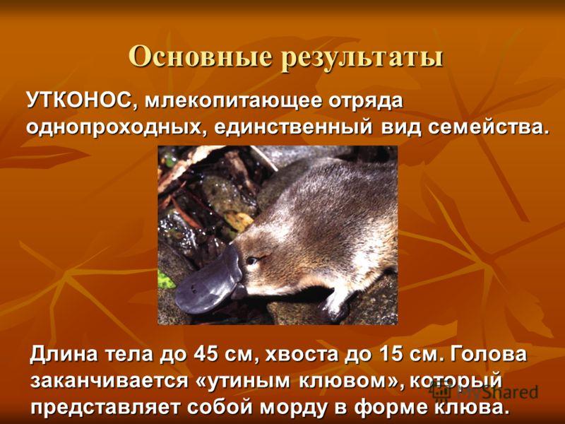 УТКОНОС, млекопитающее отряда однопроходных, единственный вид семейства. Длина тела до 45 см, хвоста до 15 см. Голова заканчивается «утиным клювом», который представляет собой морду в форме клюва. Основные результаты