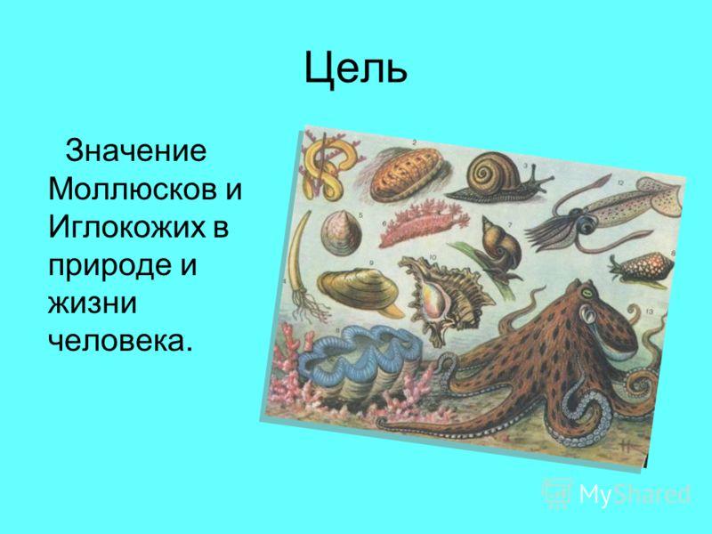 Цель Значение Моллюсков и Иглокожих в природе и жизни человека.