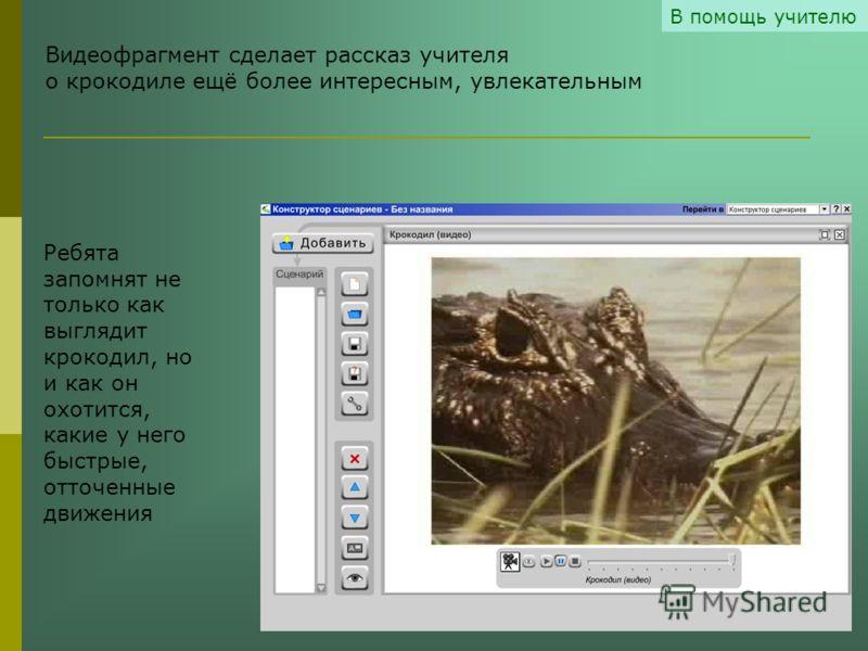 В помощь учителю Видеофрагмент сделает рассказ учителя о крокодиле ещё более интересным, увлекательным Ребята запомнят не только как выглядит крокодил, но и как он охотится, какие у него быстрые, отточенные движения