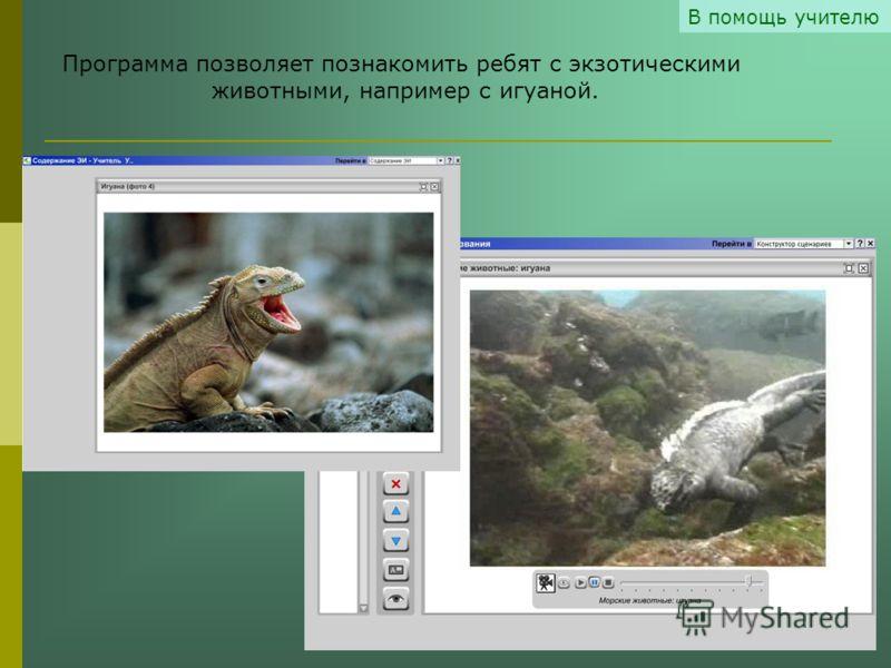 В помощь учителю Программа позволяет познакомить ребят с экзотическими животными, например с игуаной.