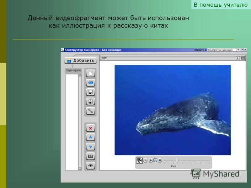 В помощь учителю Данный видеофрагмент может быть использован как иллюстрация к рассказу о китах