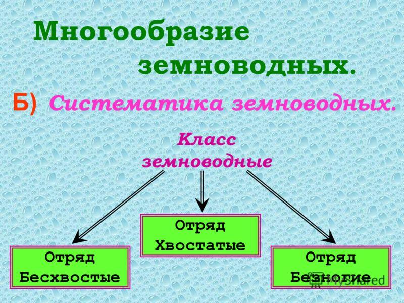 Многообразие земноводных. Б) Систематика земноводных. Класс земноводные Отряд Бесхвостые Отряд Хвостатые Отряд Безногие