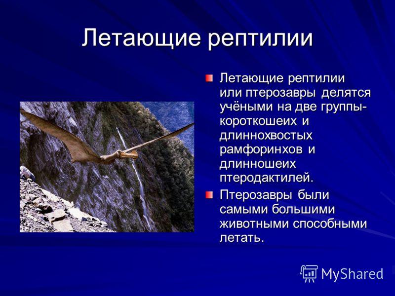 Летающие рептилии Летающие рептилии или птерозавры делятся учёными на две группы- короткошеих и длиннохвостых рамфоринхов и длинношеих птеродактилей. Птерозавры были самыми большими животными способными летать.