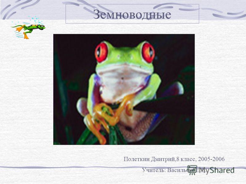 Земноводные Полеткин Дмитрий,8 класс, 2005-2006 Учитель: Васильева Е.Е.