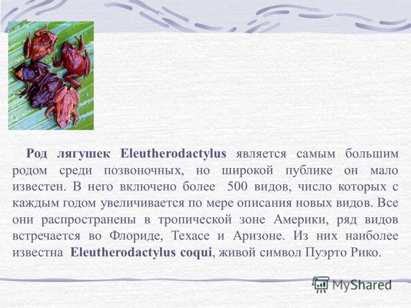 Род лягушек Eleutherodactylus является самым большим родом среди позвоночных, но широкой публике он мало известен. В него включено более 500 видов, число которых с каждым годом увеличивается по мере описания новых видов. Все они распространены в троп