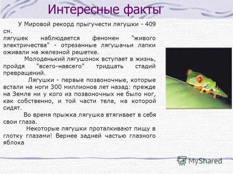 Интересные факты У Мировой рекорд прыгучести лягушки - 409 см. лягушек наблюдается феномен