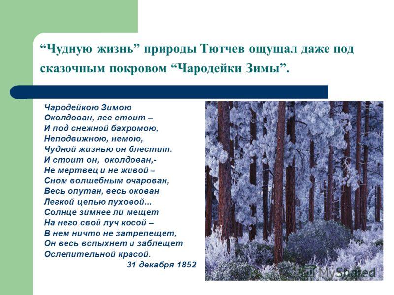 Чудную жизнь природы Тютчев ощущал даже под сказочным покровом Чародейки Зимы. Чародейкою Зимою Околдован, лес стоит – И под снежной бахромою, Неподвижною, немою, Чудной жизнью он блестит. И стоит он, околдован,- Не мертвец и не живой – Сном волшебны