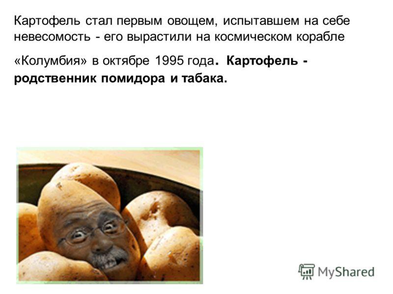 Картофель стал первым овощем, испытавшем на себе невесомость - его вырастили на космическом корабле «Колумбия» в октябре 1995 года. Картофель - родственник помидора и табака.