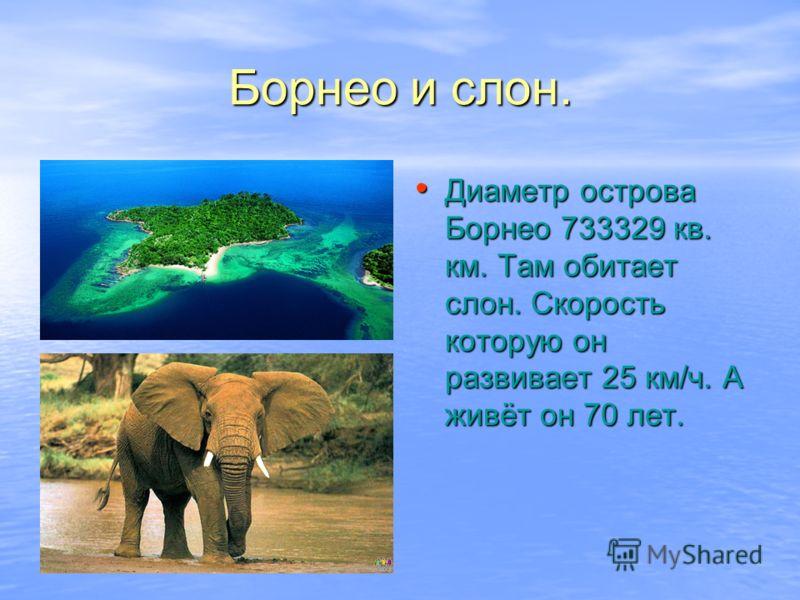 Борнео и слон. Диаметр острова Борнео 733329 кв. км. Там обитает слон. Скорость которую он развивает 25 км/ч. А живёт он 70 лет. Диаметр острова Борнео 733329 кв. км. Там обитает слон. Скорость которую он развивает 25 км/ч. А живёт он 70 лет.