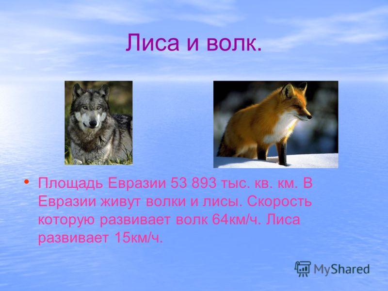 Лиса и волк. Площадь Евразии 53 893 тыс. кв. км. В Евразии живут волки и лисы. Скорость которую развивает волк 64км/ч. Лиса развивает 15км/ч.