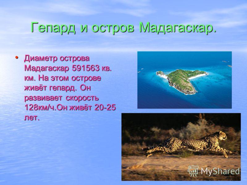 Гепард и остров Мадагаскар. Диаметр острова Мадагаскар 591563 кв. км. На этом острове живёт гепард. Он развивает скорость 128км/ч.Он живёт 20-25 лет.