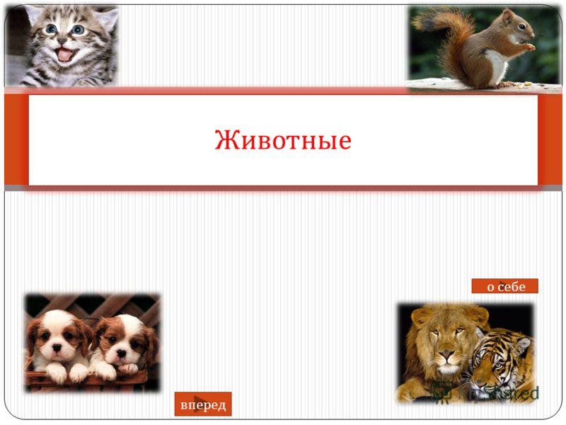 Животные вперед о себе