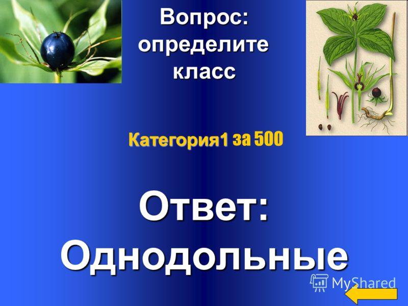 Вопрос: Почему береза,лещина, осина цветут до распускания осина цветут до распускания листьев? К какой экологической листьев? К какой экологической группе по типу опыления относятся эти растения? Ответ: пыльца с цветков одного соцветия беспрепятствен
