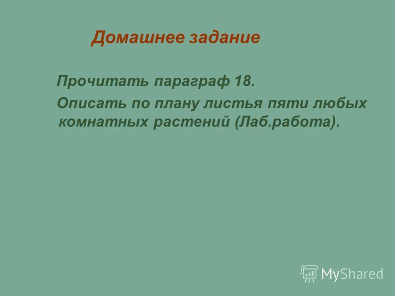 Домашнее задание Прочитать параграф 18. Описать по плану листья пяти любых комнатных растений (Лаб.работа).