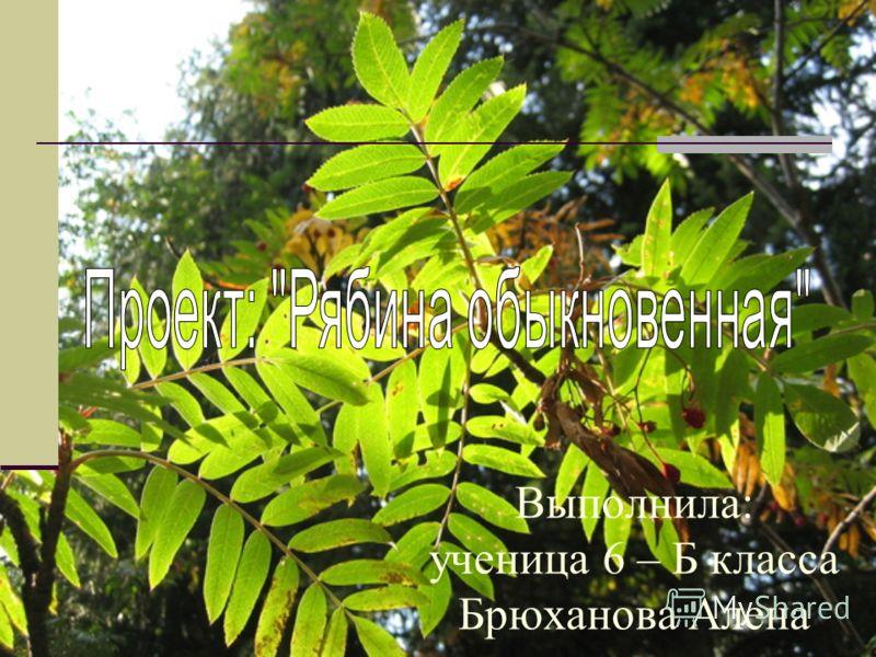 Выполнила: ученица 6 – Б класса Брюханова Алена