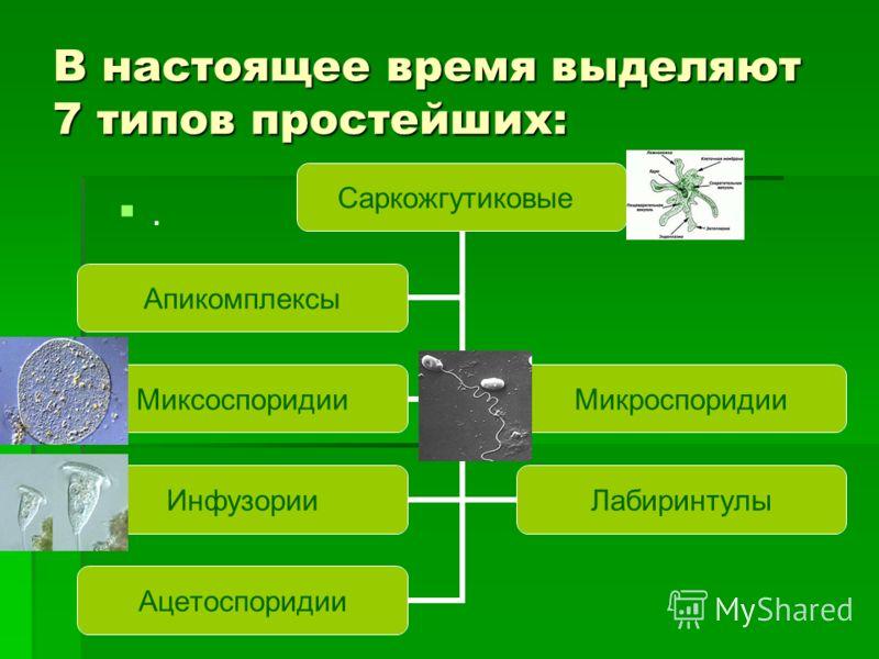 В настоящее время выделяют 7 типов простейших:. Саркожгутиковые МиксоспоридииМикроспоридии ИнфузорииЛабиринтулы Ацетоспоридии Апикомплексы