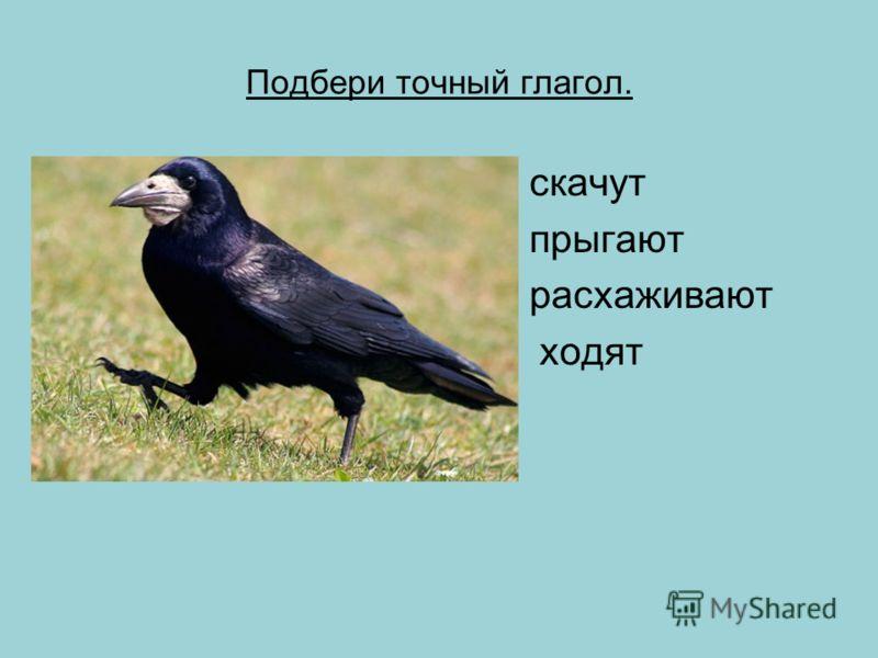 Проверь себя. Пришла весна – самое радостное время года. Оживает природа. В скверах и парках снова слышны птичьи голоса. Первыми с юга прилетают грачи. Кругом снег. А грачи важно расхаживают по весенним дорогам. После прилёта выбирают грачи парк или