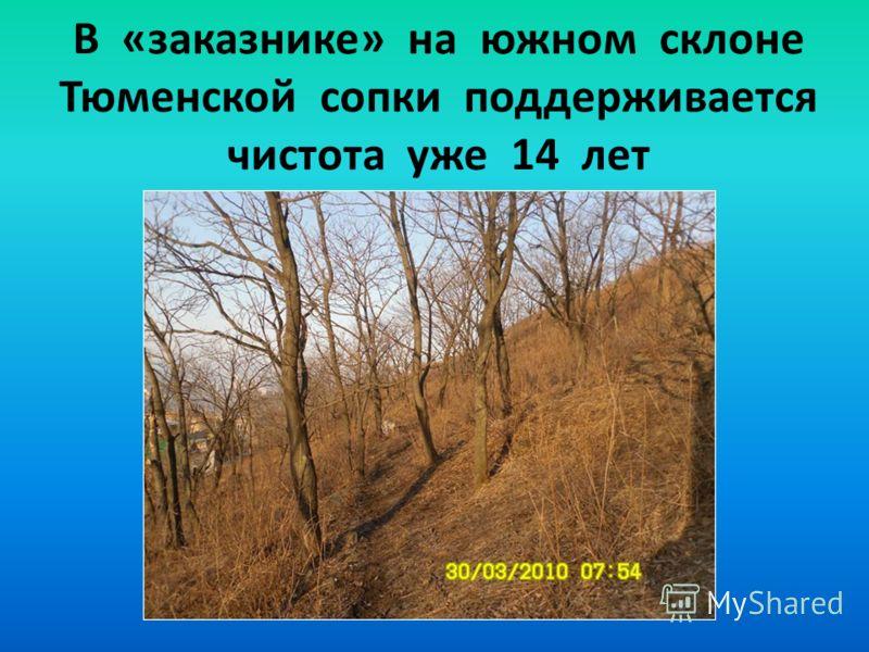 В «заказнике» на южном склоне Тюменской сопки поддерживается чистота уже 14 лет