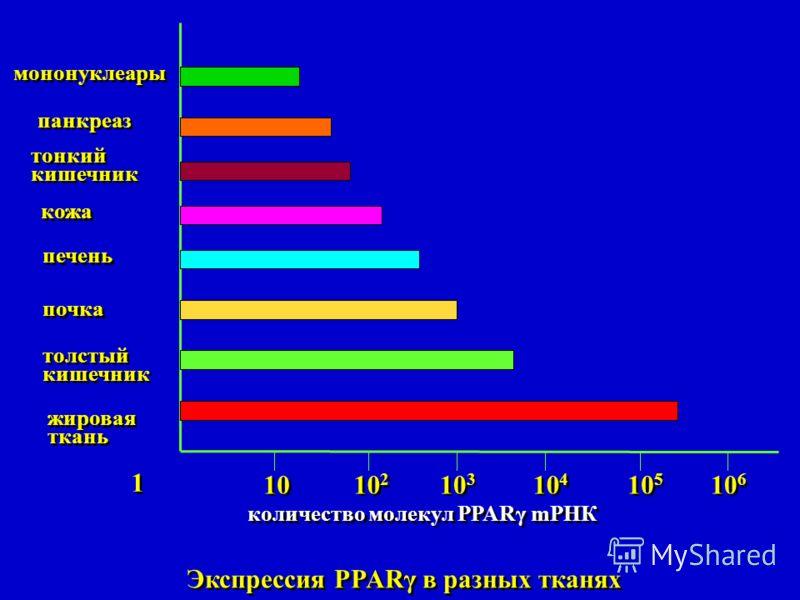 1 1 10 10 2 10 3 10 4 10 5 10 6 мононуклеары панкреаз тонкий кишечник тонкий кишечник кожа печень почка толстый кишечник толстый кишечник жировая ткань жировая ткань Экспрессия PPARγ в разных тканях количество молекул PPARγ mРНК