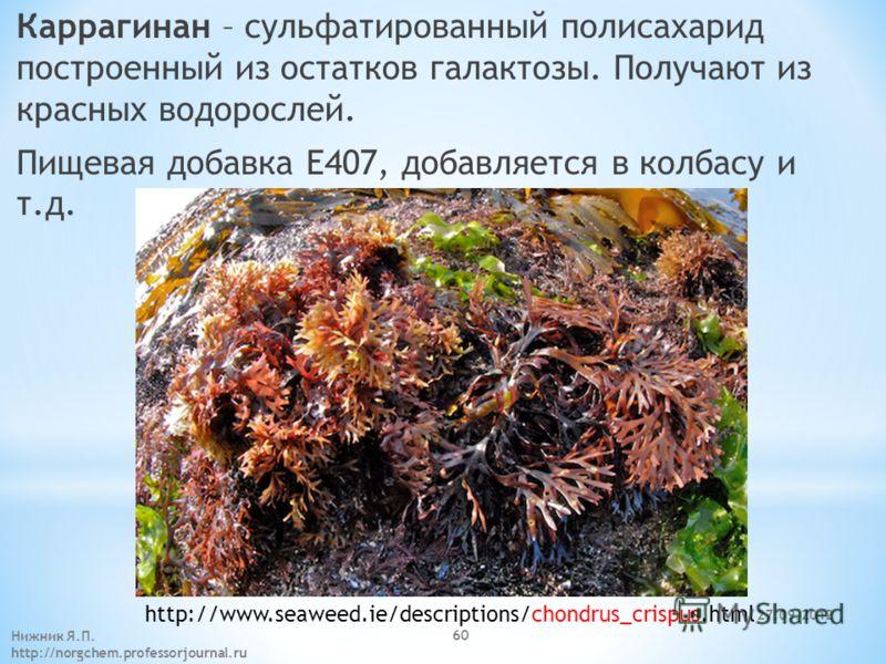 27.09.2012 Нижник Я.П. http://norgchem.professorjournal.ru 60 Каррагинан – сульфатированный полисахарид построенный из остатков галактозы. Получают из красных водорослей. Пищевая добавка E407, добавляется в колбасу и т.д. http://www.seaweed.ie/descri