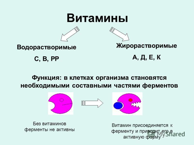 Витамины Водорастворимые С, В, РР Жирорастворимые А, Д, Е, К Функция: в клетках организма становятся необходимыми составными частями ферментов Без витаминов ферменты не активны Витамин присоединяется к ферменту и приводит его в активную форму