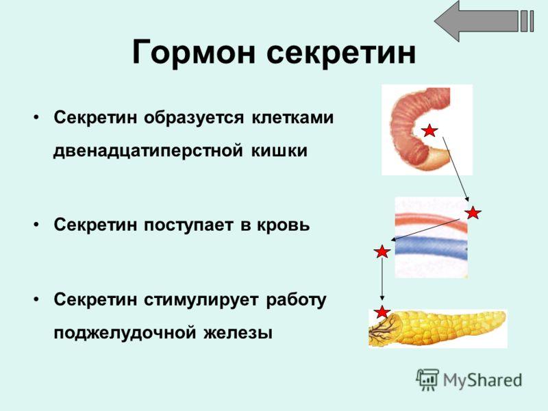 Гормон секретин Секретин образуется клетками двенадцатиперстной кишки Секретин поступает в кровь Секретин стимулирует работу поджелудочной железы