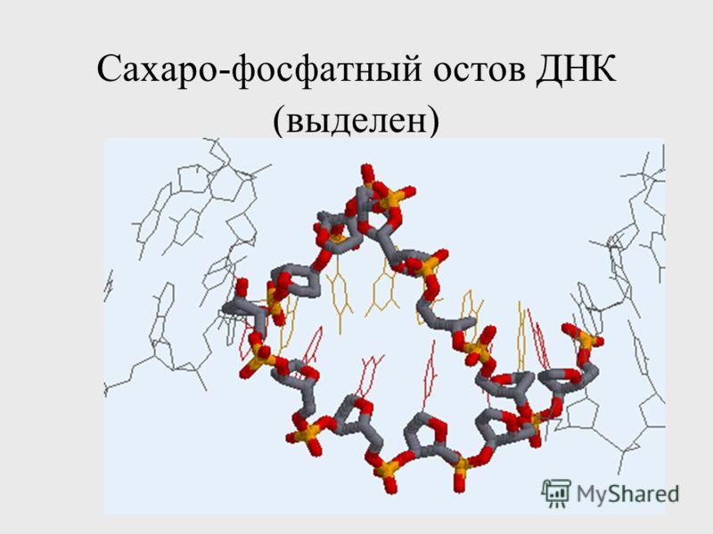 Сахаро-фосфатный остов ДНК (выделен)
