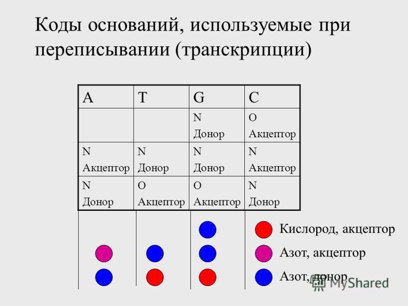 Коды оснований, используемые при переписывании (транскрипции) ATGC N Донор O Акцептор N Акцептор N Донор N Донор N Акцептор N Донор O Акцептор O Акцептор N Донор Кислород, акцептор Азот, донор Азот, акцептор