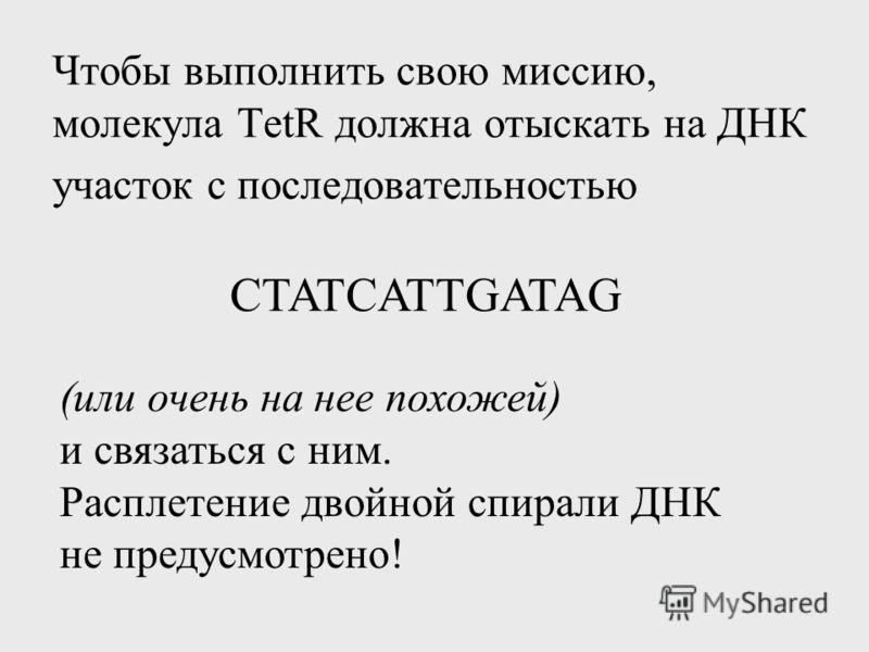 Чтобы выполнить свою миссию, молекула TetR должна отыскать на ДНК участок с последовательностью CTATCATTGATAG (или очень на нее похожей) и связаться с ним. Расплетение двойной спирали ДНК не предусмотрено!