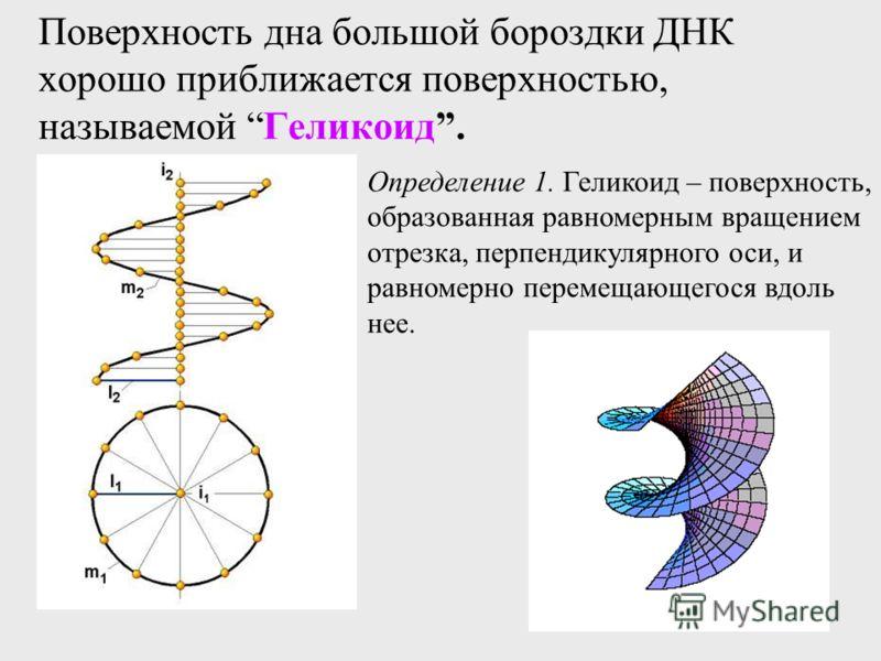 Поверхность дна большой бороздки ДНК хорошо приближается поверхностью, называемой Геликоид. Определение 1. Геликоид – поверхность, образованная равномерным вращением отрезка, перпендикулярного оси, и равномерно перемещающегося вдоль нее.