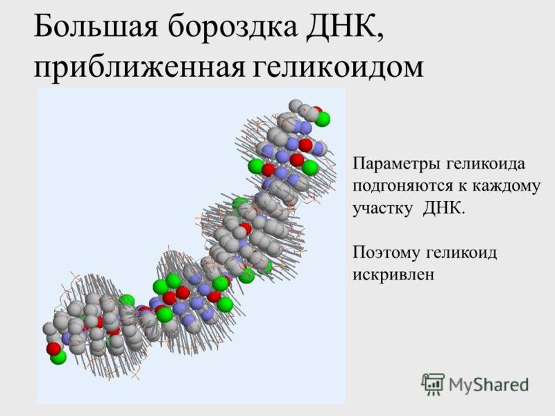 Большая бороздка ДНК, приближенная геликоидом Параметры геликоида подгоняются к каждому участку ДНК. Поэтому геликоид искривлен