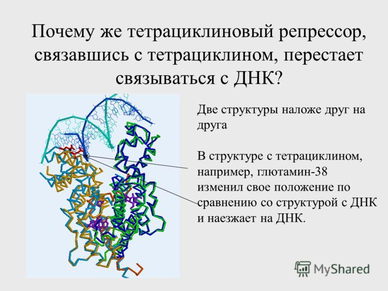 Почему же тетрациклиновый репрессор, связавшись с тетрациклином, перестает связываться с ДНК? Две структуры наложе друг на друга В структуре с тетрациклином, например, глютамин-38 изменил свое положение по сравнению со структурой с ДНК и наезжает на