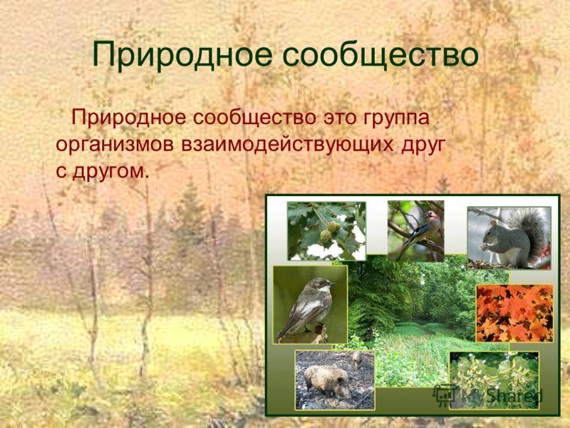 Природное сообщество Природное сообщество это группа организмов взаимодействующих друг с другом.