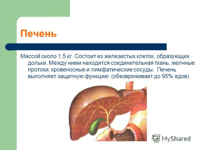 Печень Массой около 1,5 кг. Состоит из железистых клеток, образующих дольки. Между ними находится соединительная ткань, желчные протоки, кровеносные и лимфатические сосуды. Печень выполняет защитную функцию (обезвреживает до 95% ядов)