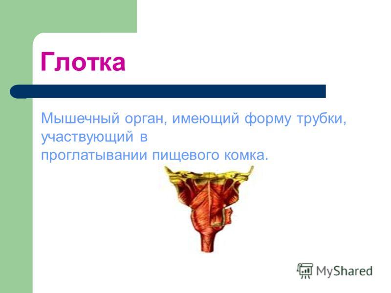 Глотка Мышечный орган, имеющий форму трубки, участвующий в проглатывании пищевого комка.