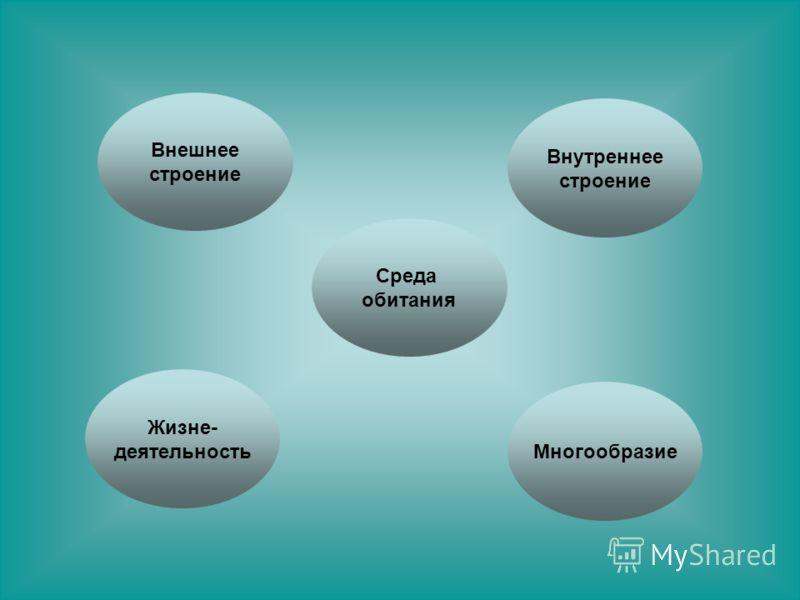Среда обитания Жизне- деятельность Внешнее строение Многообразие Внутреннее строение