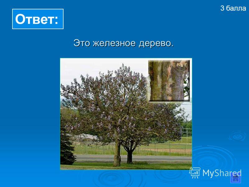 Ответ: Это железное дерево. 3 балла