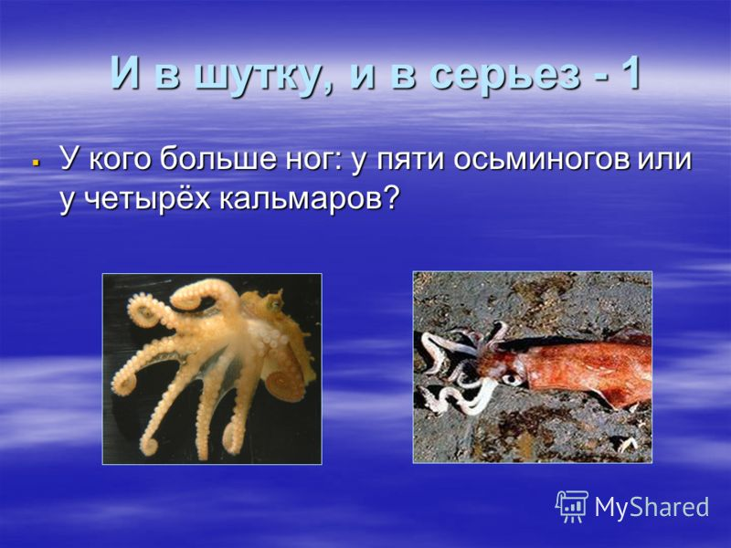 И в шутку, и в серьез - 1 И в шутку, и в серьез - 1 У кого больше ног: у пяти осьминогов или у четырёх кальмаров? У кого больше ног: у пяти осьминогов или у четырёх кальмаров?