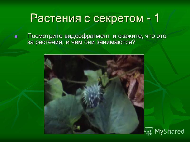Растения с секретом - 1 Посмотрите видеофрагмент и скажите, что это за растения, и чем они занимаются? Посмотрите видеофрагмент и скажите, что это за растения, и чем они занимаются?