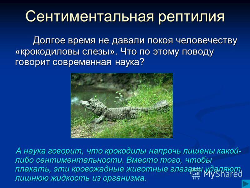 Сентиментальная рептилия Долгое время не давали покоя человечеству «крокодиловы слезы». Что по этому поводу говорит современная наука? Долгое время не давали покоя человечеству «крокодиловы слезы». Что по этому поводу говорит современная наука? А нау