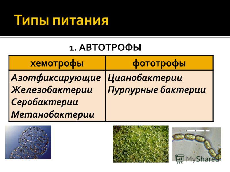 1. АВТОТРОФЫ хемотрофыфототрофы Азотфиксирующие Железобактерии Серобактерии Метанобактерии Цианобактерии Пурпурные бактерии