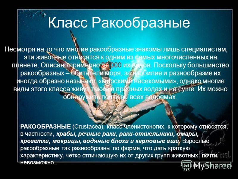 Класс Ракообразные РАКООБРАЗНЫЕ (Crustacea), класс членистоногих, к которому относятся, в частности, крабы, речные раки, раки-отшельники, омары, креветки, мокрицы, водяные блохи и карповые вши. Взрослые ракообразные так разнообразны по форме, что дат